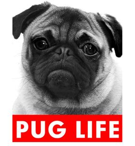 cycle of a pug related keywords suggestions for pug