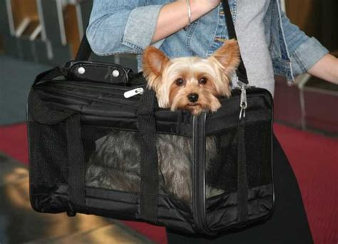 flying with a in cabin flying with dogs airline approved crates and carriers top tips
