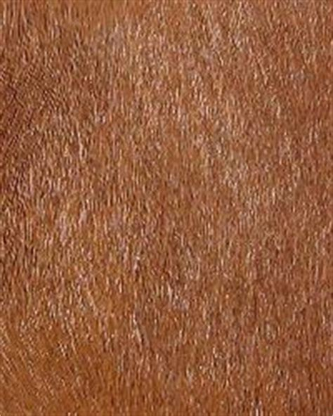horse hair upholstery equestrian leather and horse hair fabric