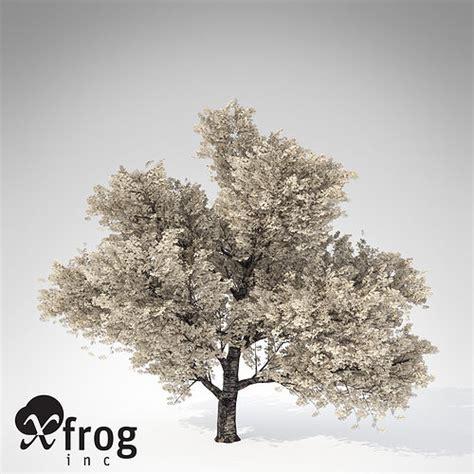 cherry blossom tree 3d model free xfrogplants yoshino cherry tree 3d cgtrader