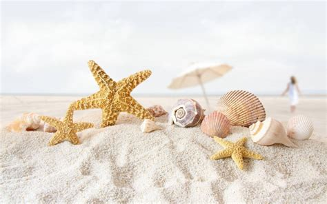 shell wallpaper star fish sea shell beach wallpaper 8 1280