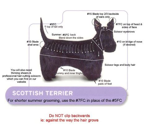 cutting a scottish terrier hair 25 best ideas about scottish terriers on pinterest