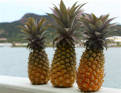 pineapple wallpaper pineapple background wallpapers win10 themes