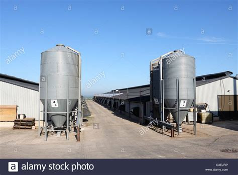 Broiler Poultry Farm Shed feed silos outside broiler chicken sheds at a poultry farm