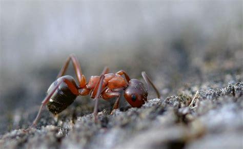 Ameisen Auf Der Terrasse 4711 by Wirkungsvolle Insektenschutzma 223 Nahmen F 252 R Das Ganze Haus