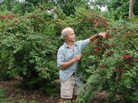 Journals of the Lesser Known   Tierra Organics
