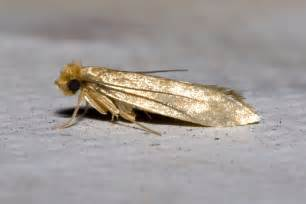 how to moths in house apps directories
