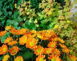 late blooming perennials summer flower summer flowering perennials
