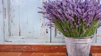 Comment planter de la lavande dans son jardin plantes maison