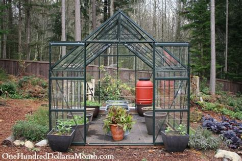 my winter greenhouse garden one hundred dollars a month - Winter Greenhouse Gardening