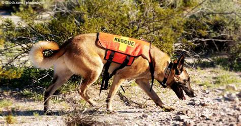 search dogs what does it take to be a search and rescue