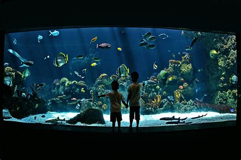 Minnesota Zoo Aquarium Underwater Flickr Photo Sharing Minnesota Zoo Lights