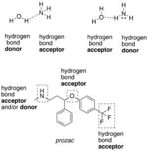proton h acceptor hydrogen bond