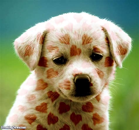 puppy lover puppy pictures freaking news