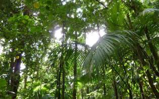 What Is A Canopy In The Rainforest by View Of The Rainforest Canopy Pictures To Pin On Pinterest