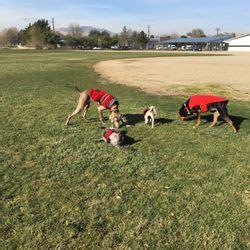 puppy sparks nv s house daycare boarding 32 billeder dyrepasning 325 5th st