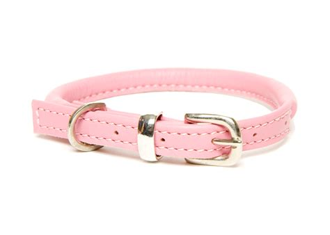 pink dogs best pink collars