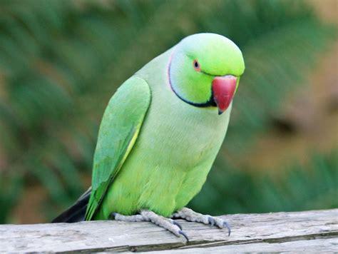 wallpaper of green parrot green parrot wallpaper