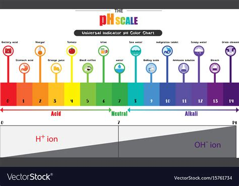 ph color scale ph scale universal indicator ph color chart vector image