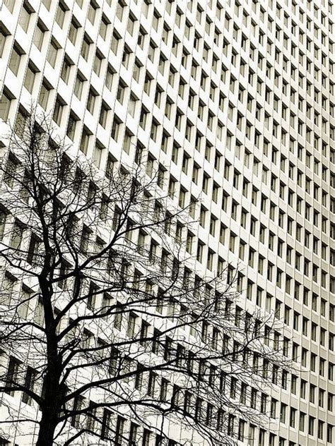 the pattern and nature of urbanization urban nature by david foster nass via flickr beautiful