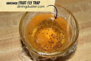Fruit Flies Trap Get Rid Of Pesky Fruit Flies With An Easy Diy Fruit Fly
