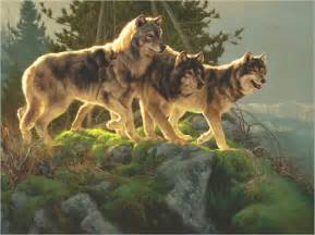 white wolf greg beecham american artist of the wild west