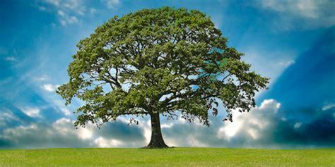 imagenes de arboles zen el ver un 193 rbol puede ayudar a aliviar el estr 233 s