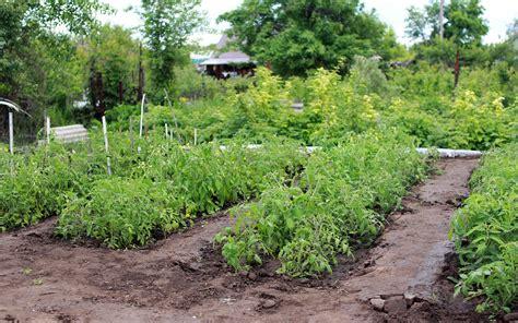 Organic Vegetable Gardening Tips You Ll Want To Use Vegetable Garden Basics