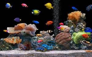Best Plants For Tropical Aquarium - aquarium bulles d eau chirurgien bleu couleur vive poisson clown poissons nature