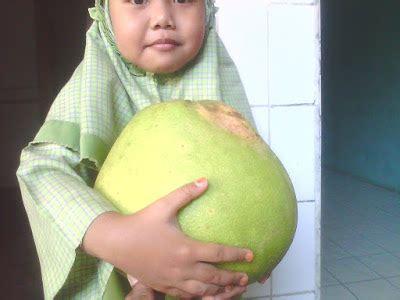 Bibit Kelengkeng Di Bali aneka bibit tanaman unggulan dan aneka usaha untuk anda