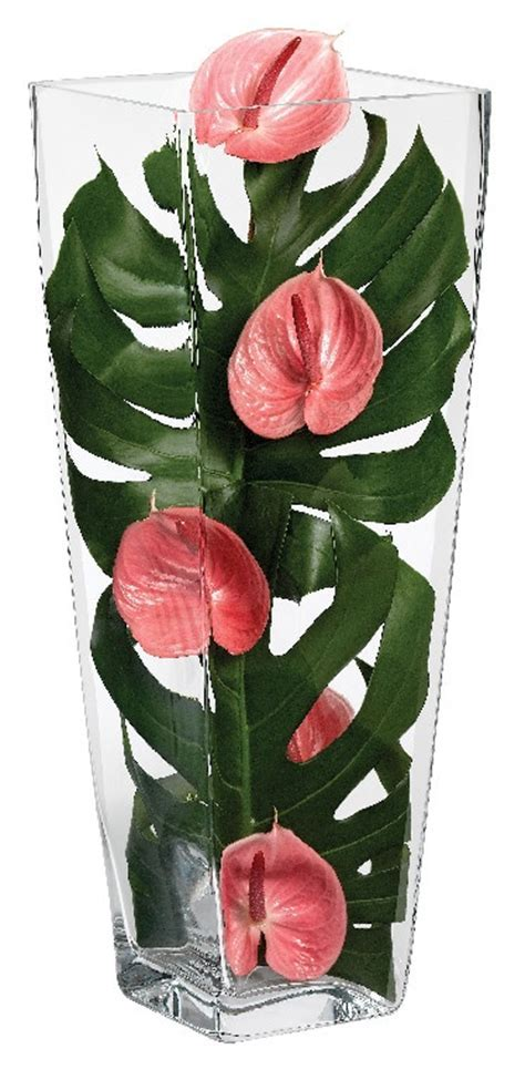 44 best images about Anthurium on Pinterest
