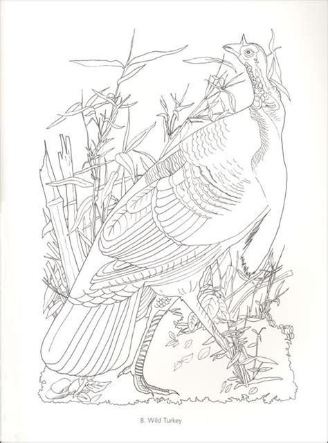 275 Best Images About Vogel Kleurplaten On Pinterest Worksheets Audubon