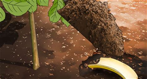 come uccidere le formiche volanti 4 modi per eliminare le mosche bianche wikihow