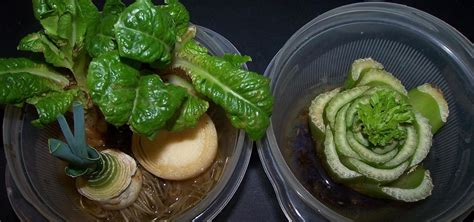 94 vegetables you eat 10 vegetables herbs you can eat once regrow forever