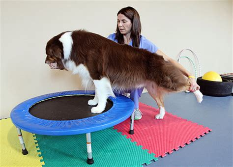 physical therapy for dogs rehab physical therapy broward palm dade fl