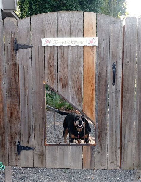 backyard fence for dogs 2800 best holding images on pinterest