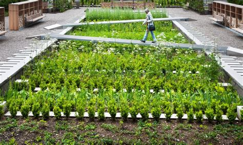 medicinal herb garden takes root   grounds