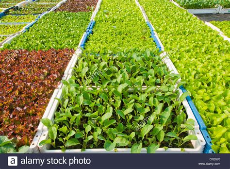 vegetables to europe europe field field cultivation garden vegetables