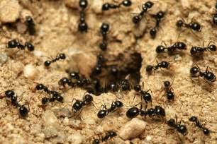 c 243 mo eliminar las hormigas jard 237 n 8 pasos uncomo
