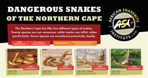 party themes kimberley northern cape snakes of kimberley and the northern cape kimberley city
