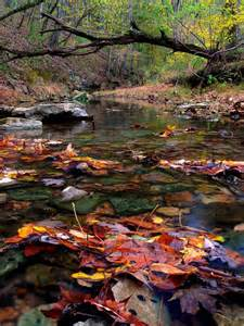 Beautiful Autumn Stream