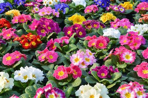 fiori senza luce fiori all ombra quali coltivare idee green