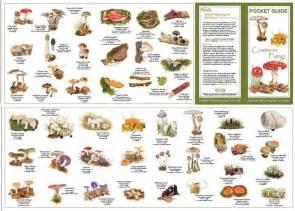 Common Backyard Mushrooms 25 Best Ideas About Mushroom Identification On Pinterest