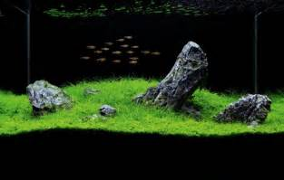 how to set up an iwagumi aquarium practical fishkeeping