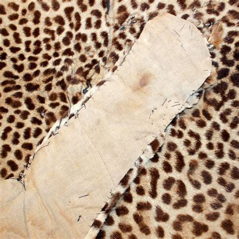 authentic skin rug authentic antique leopard skin rug discovered in at 1stdibs