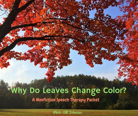 when do leaves change color leaves change 2016