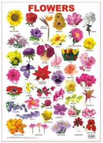 Variety Of Flowers For Garden Best Ideas About Identification Charts Identification Children And Flower Identification On