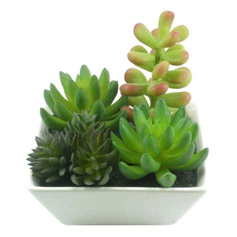 fazer plantas aprenda como fazer mudas de plantas