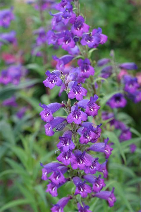 small flower plants file small purple flowers jpg wikimedia commons