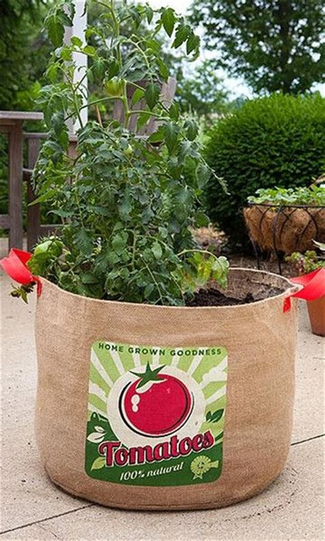 tomato grow bag to be bags and burlap